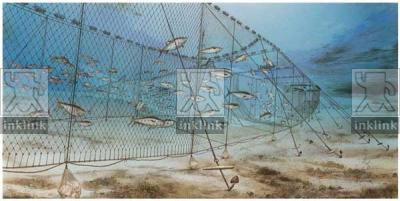 L'ingresso dei tonni nelle reti